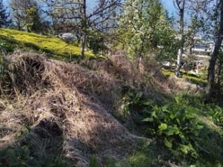 Derepazarı/Sandıktaş Köyü'nde Yatırımlık/Otellik/Villalık Arazi