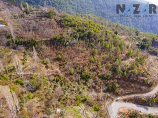 Alanya Bademağacı Köyü'nde Satılık Arsa & Land for Sale in Bademağacı Village Alanya