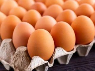 Toptan gezen organik tavuk  yumurtası hijyen koşullarda sizlerle .